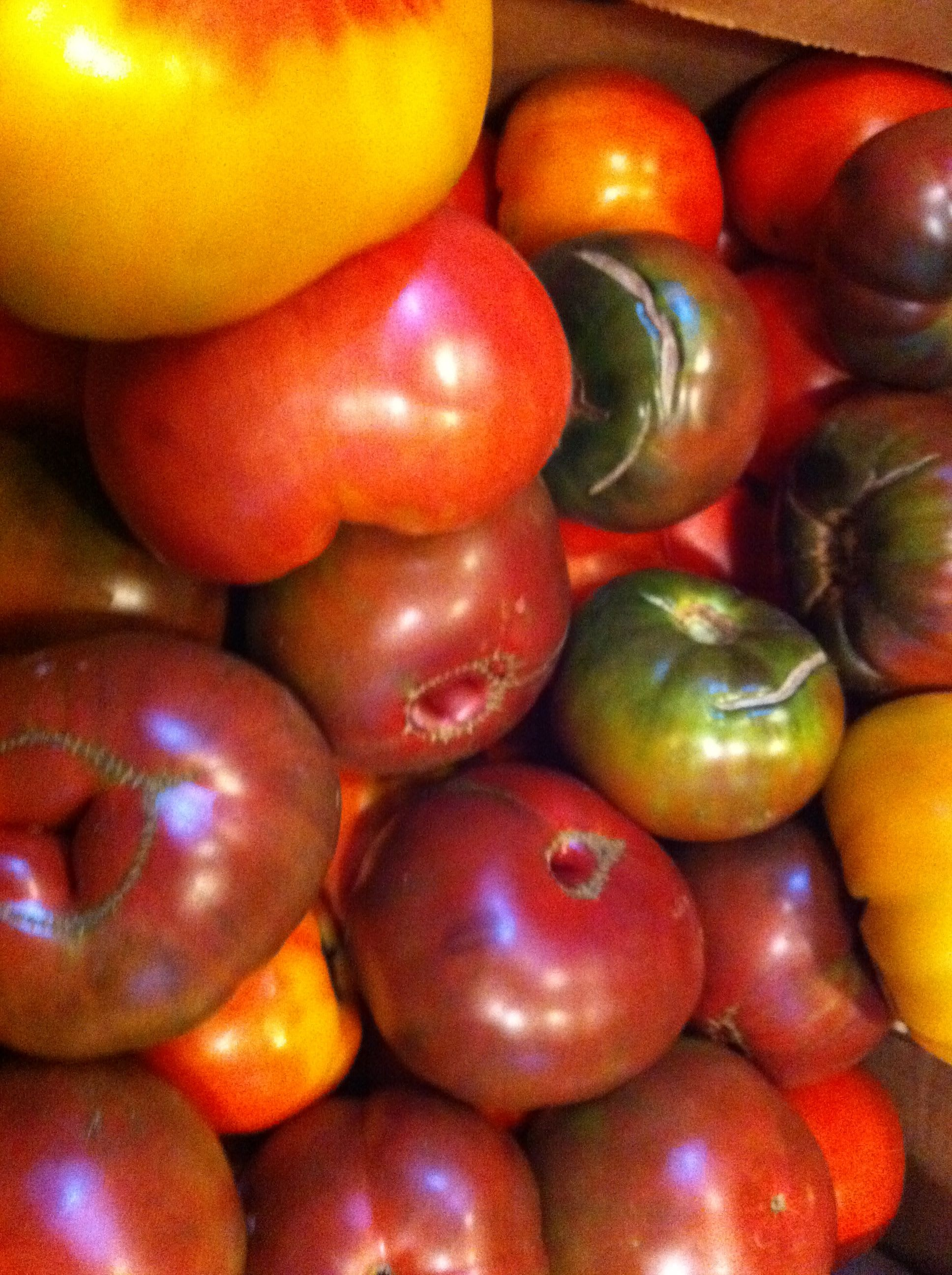 Heirloom tomatoes at Taberna de Haro